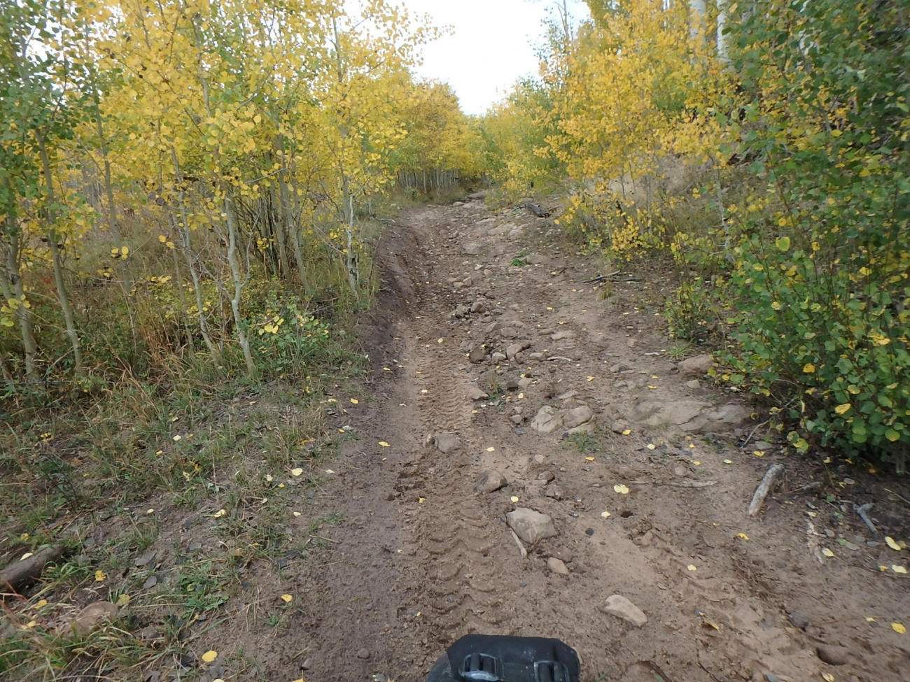 Another Jeep Trail